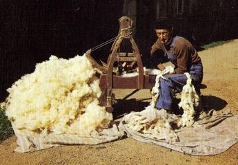 Cardeur de laines