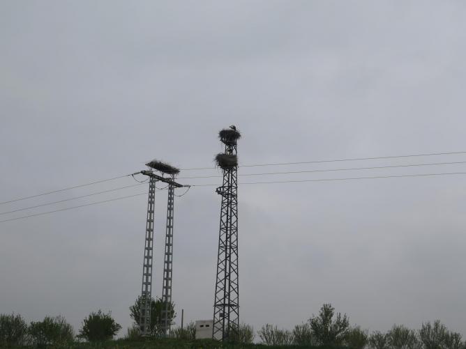 Img 620