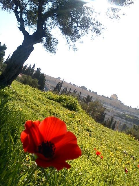 Israel sylvie 12