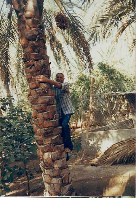 Messaoud edouard
